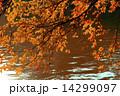 葉 天然 自然の写真 14299097