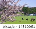 サラブレッド銀座の桜 14310061
