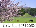 サラブレッド銀座の桜 14310062