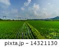 春の千葉の田園風景 14321130