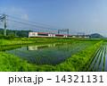 春の千葉の田園風景 14321131