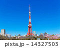 芝公園の満開のサトザクラと東京タワー 14327503