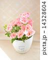 ピンクのスプレーバラ 14328604