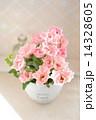 ピンクのスプレーバラ 14328605