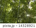 竹林 14328921