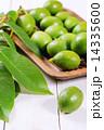 クルミ グリーン 緑の写真 14335600