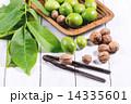 クルミ グリーン 緑の写真 14335601