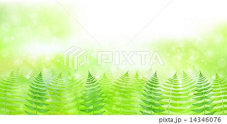 シダ 葉 植物 14346076