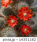 お花 フラワー 咲く花の写真 14351162
