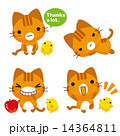 ベクター トラ猫 ネコのイラスト 14364811