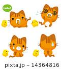 トラ猫 ベクター ひよこのイラスト 14364816