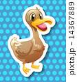 あひる アヒル 鳥のイラスト 14367889