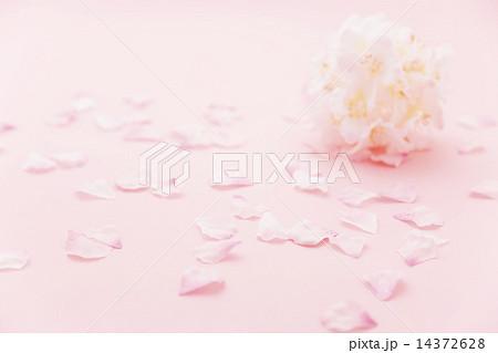 桜のイメージ 14372628