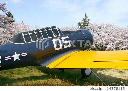 米海軍厚木基地正門マッカーサーガーデンに展示されているSNJ練習機と満開の桜、ソメイヨシノ 14376116