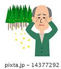 杉花粉 ベクター 杉のイラスト 14377292