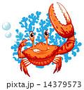 A crab 14379573