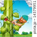 Beanstalk 14379951