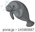 Sea cow 14380887