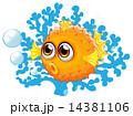 フグ サカナ 魚のイラスト 14381106