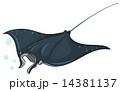 Stingray 14381137