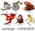 Animals 14381626