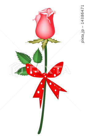 Lovely Red Rose with Red Ribbonのイラスト素材 [14386471] - PIXTA