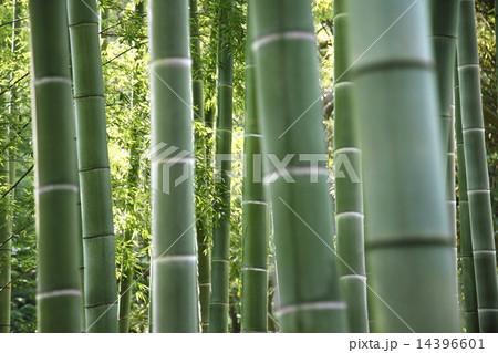 竹林 和風イメージ 14396601