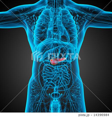 3d render  illustration of the humerus bone 14396984