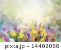 花 水彩画 フラワーのイラスト 14402066
