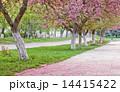 咲く 開花 花の写真 14415422