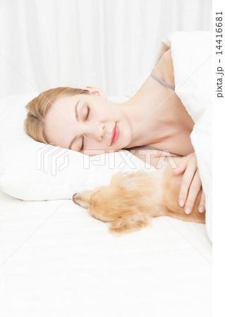 犬と寝る若い白人女性 14416681