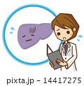疾患 肝臓 ベクターのイラスト 14417275