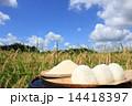 秋の空と田んぼと新米のおにぎり 14418397