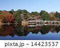 11月秋 紅葉の浮見堂  奈良公園の秋景色 14423537