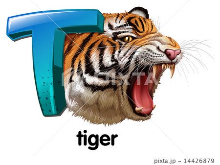 A roaring tigerのイラスト素材 [14426879] - PIXTA