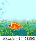 サカナ 魚 魚類のイラスト 14428693