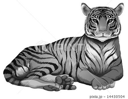 A grey tigerのイラスト素材 [14430504] - PIXTA