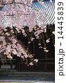 京都・妙満寺の桜 14445839
