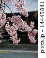 京都・妙満寺の桜 14445841