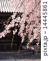 京都・妙満寺の桜 14445861