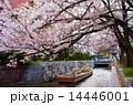 京都・高瀬川の桜と高瀬舟 14446001