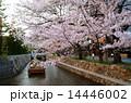京都・高瀬川の桜と高瀬舟 14446002