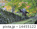百済寺 紅葉 石垣の写真 14455122