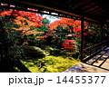 妙心寺 大法院 庭園の写真 14455377