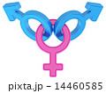 Female and two male gender symbols  14460585