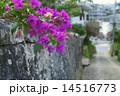 沖縄の首里金城町石畳道 14516773