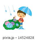 ベクター 蝸牛 梅雨のイラスト 14524828