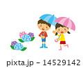 子供とアジサイ 14529142
