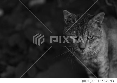 クールな猫 14532193