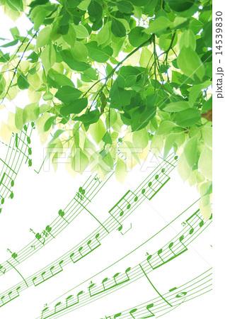 楠木(別名:クス)の若葉と楽譜の合成 縦 14539830